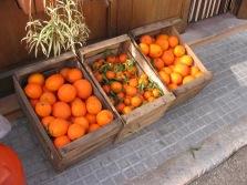 Mallorca Orangen